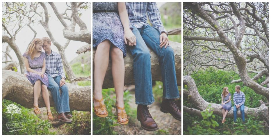 Trees, Big Sur, Engagement, Engaged, Photos, Rustic, Vintage